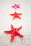 Rode overzeese sterren Stock Fotografie