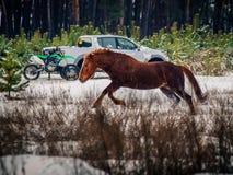 Rode paardlooppas royalty-vrije stock afbeeldingen