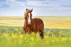 Rode paardlooppas stock foto's