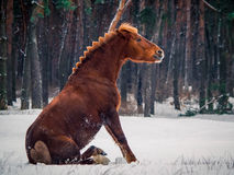 Rode paardzitting Stock Fotografie