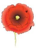 Rode papaver Royalty-vrije Stock Foto's
