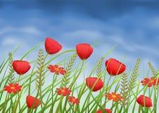 Rode papaver-bloemen en madeliefjes op de zomerweide royalty-vrije illustratie