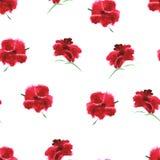 Rode papaver, olieverfschilderij Vector naadloos patroon Royalty-vrije Stock Afbeelding