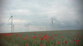 Rode papaverinstallaties en blauwe bloemen in cornfield bij bewolkt weer De turbine en de bomen van de windenergie op de achtergr stock footage