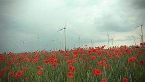 Rode papaverinstallaties en blauwe bloemen in cornfield bij bewolkt weer De turbine en de bomen van de windenergie op de achtergr stock video