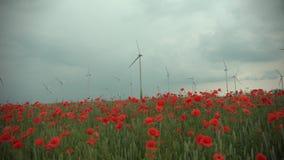 Rode papaverinstallaties en blauwe bloemen in cornfield bij bewolkt weer De turbine en de bomen van de windenergie op de achtergr stock videobeelden