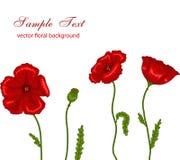 Rode papavers Royalty-vrije Stock Afbeeldingen
