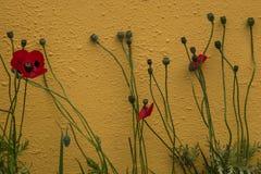 Rode papavers die tegen amber gekleurde muur, symbool groeien van herinnering van de Grote Oorlog, Wereldoorlog  stock foto's