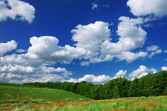 Rode papavers op het groene gebied Stock Afbeeldingen