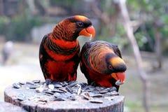Rode papegaai Stock Foto