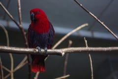 Rode papegaai op een boom royalty-vrije stock fotografie