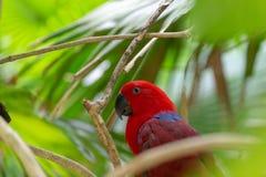 Rode papegaaizitting in een boom, zijbeeld stock foto's