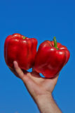 Rode paprika in een hand Royalty-vrije Stock Afbeelding