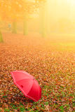 Rode paraplu in de herfstpark op bladerentapijt Stock Fotografie
