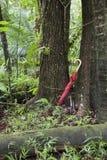 Rode paraplu die tegen boom in regenwoud leunen Stock Afbeelding