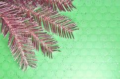 Rode Pijnboomtak op Groene Achtergrond stock fotografie