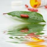 Rode pil over een groen blad stock foto's