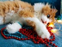 Rode pluizige kat die op een Kerstmisslinger liggen stock foto