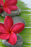 Rode Plumeria Royalty-vrije Stock Afbeelding