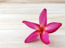 Rode plumeriabloem op houten vloerachtergrond stock foto