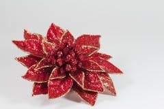 Rode Poinsettia Royalty-vrije Stock Afbeeldingen
