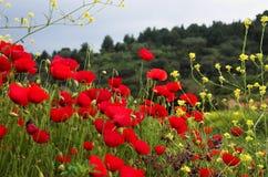 Rode poppiies en gele bloemen royalty-vrije stock foto's