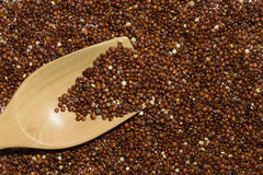 Rode quinoa met houten lepel Royalty-vrije Stock Afbeelding