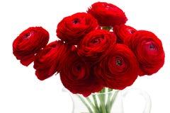Rode ranunculus bloemen stock afbeelding