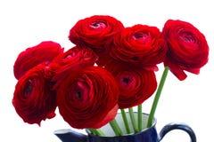 Rode ranunculus bloemen stock fotografie