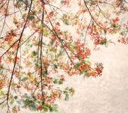 Rode Retro kleurentoon van Flam-boyant bloem met lichte grungeachtergrond Royalty-vrije Stock Afbeelding