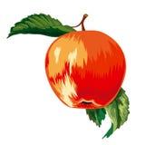 Rode, rijpe appel royalty-vrije illustratie