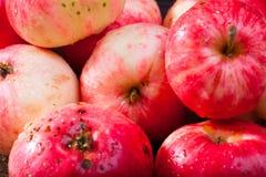 Rode rijpe appelen Stock Fotografie