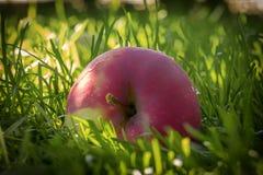 Rode rijpe appelen op het sappige groene gras royalty-vrije stock foto