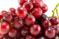 Rode rijpe druif Stock Foto