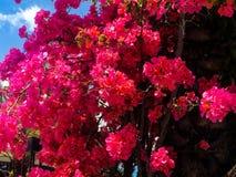 Rode rododendronbloemen royalty-vrije stock foto's