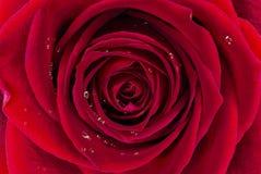 Rode Rose Background royalty-vrije stock foto