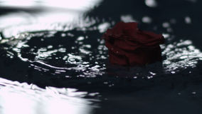 Rode Rose Falling In Water stock footage