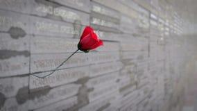 Rode Rose In Memorial stock footage