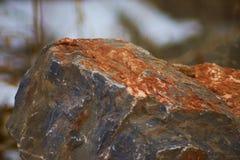 Rode Rots Stock Afbeeldingen
