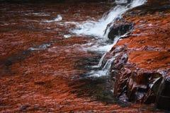 Rode Rots Royalty-vrije Stock Afbeeldingen