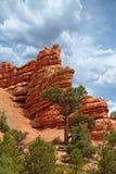 Rode Rots Cliff Hoodoos Pillar Spires Rise boven Pijnboombomen I Royalty-vrije Stock Afbeeldingen