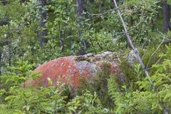 Rode rots in noordelijk Zweden Stock Afbeelding