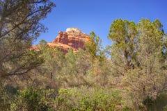 Rode Rotsberg dichtbij Sedona met blauwe hemel en cactu Stock Afbeeldingen