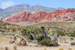 Rode rotscanion, Nevada Royalty-vrije Stock Foto