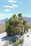 Rode Rotscanion, Nevada, de V.S. Royalty-vrije Stock Afbeeldingen