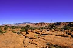 Rode Rotsen en Woestijn Stock Afbeeldingen