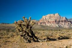 Rode rotsenwoestijn Royalty-vrije Stock Fotografie