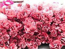 Rode roze mooie natuurlijke weelderige bloemen van roze pioenenbloemblaadjes De achtergrond Textuur stock afbeelding