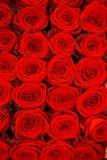 Rode rozen Stock Fotografie