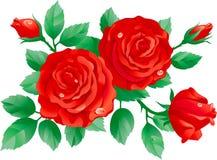 Rode rozen stock illustratie